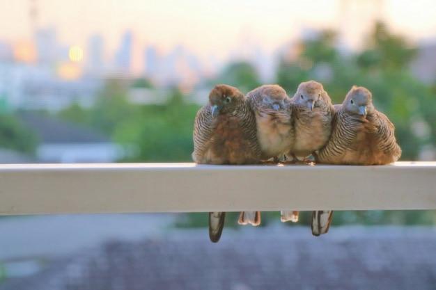Leuke duiven zat op het terras van een gebouw in de stad met onscherpe achtergrond.