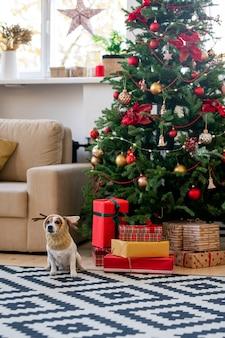 Leuke en grappige hond in warme gebreide hoofddeksels zittend op tapijt in de woonkamer tegen versierde kerstboom en dozen met geschenken