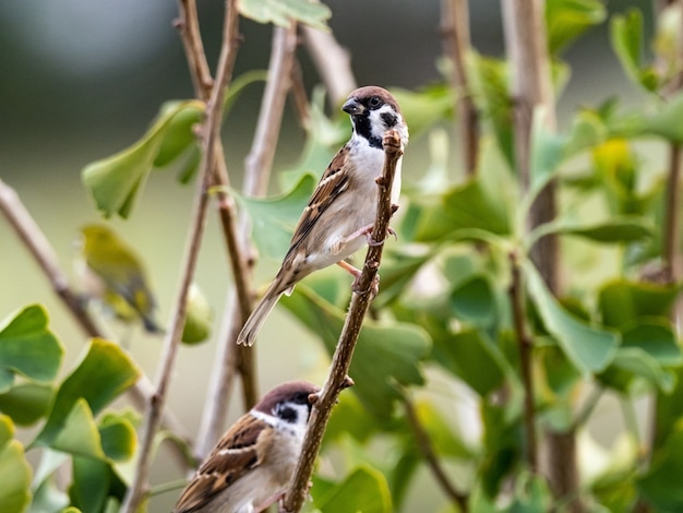 Leuke exotische vogel staande op een boomtak in het midden van een bos