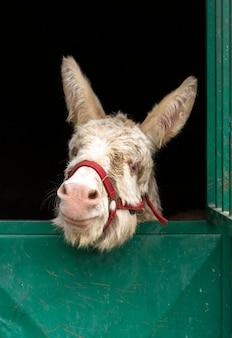 Leuke ezel in stabiele landelijke levensstijl
