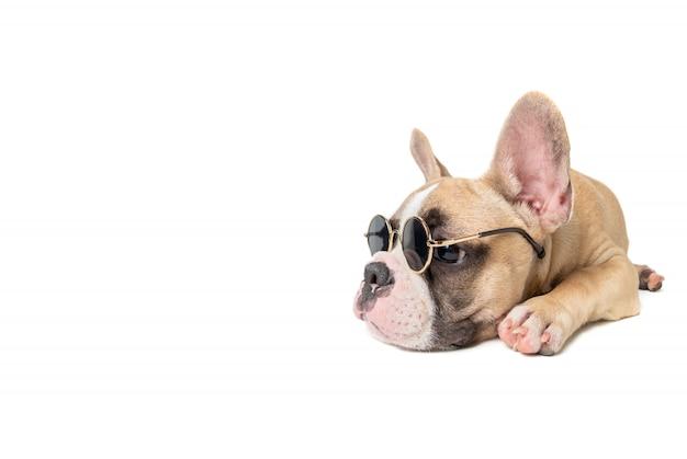 Leuke franse buldog draagt zonnebril en slaap
