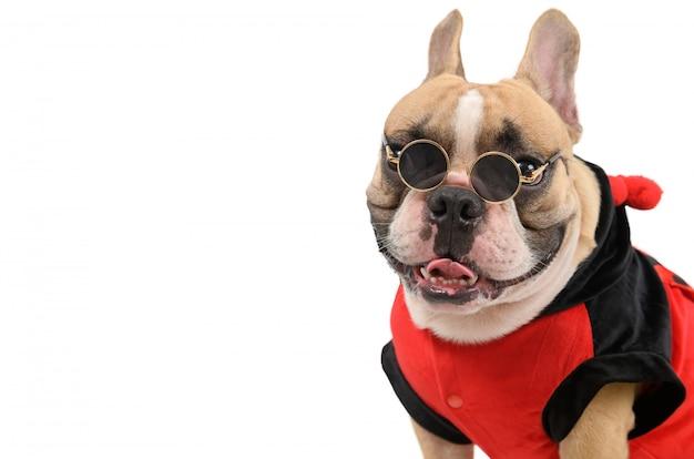 Leuke franse bulldog die een kostuum draagt