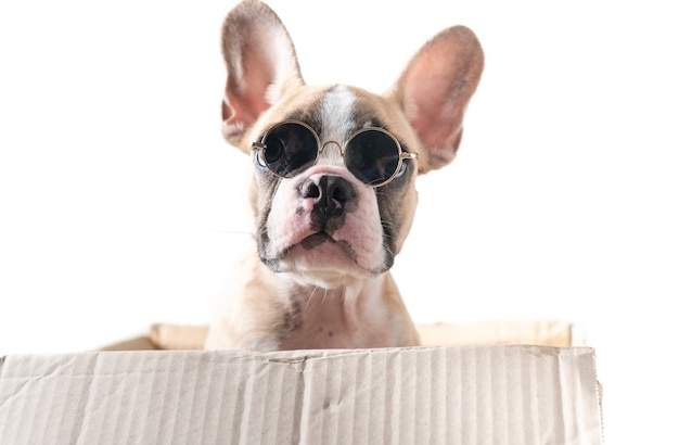 Leuke franse bulldog-sunglass in papieren doos