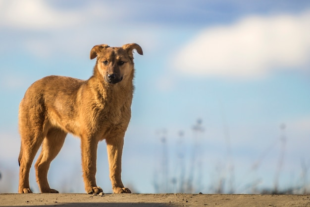 Leuke gele hond die zich tegen blauwe hemel bevindt