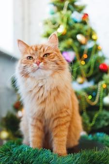 Leuke gemberkat en kerstboom. het pluizige grappige huisdier zit voor kerstmis verfraaide spar.