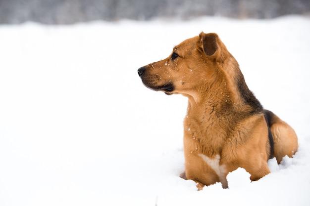 Leuke gemengde rassenhond buiten. bastaard in de sneeuw