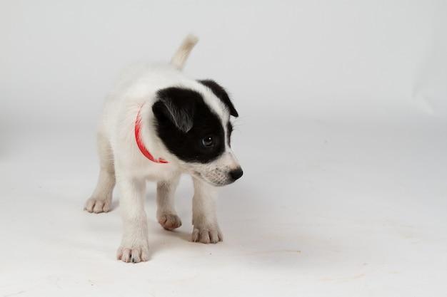 Leuke gemengde rassenhond die opzij kijkt