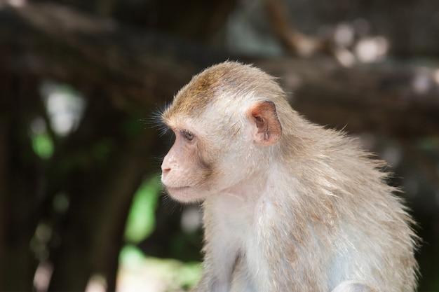 Leuke grappige aap gezicht portret weergave in natuurlijke bos van thailand extreme close-up