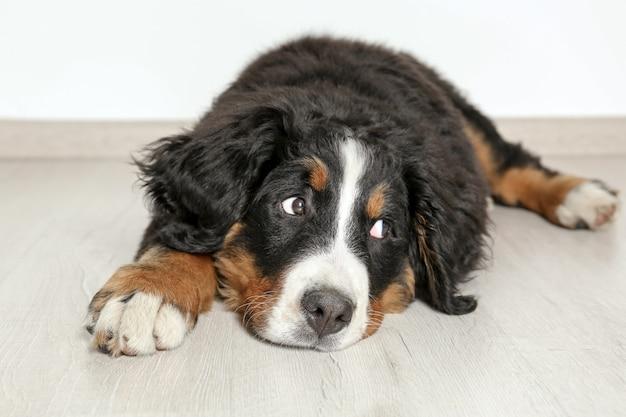 Leuke grappige hond die thuis op de vloer ligt