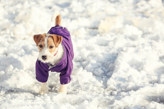 Leuke grappige hond in warme kleren buiten op winterdag