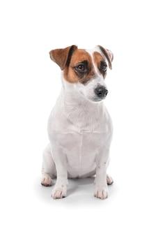 Leuke grappige hond op witte achtergrond