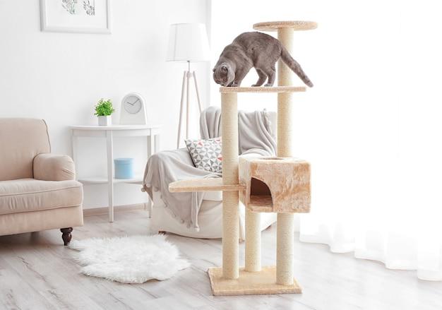 Leuke grappige kat die thuis op boom speelt