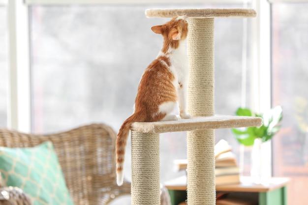 Leuke grappige kat en boom in de kamer