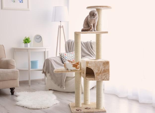Leuke grappige katten die thuis op boom spelen