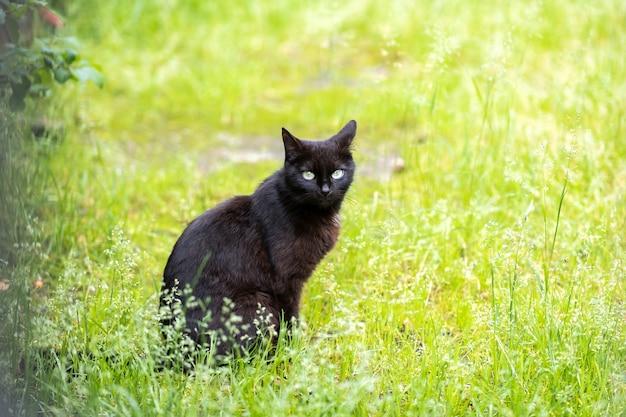 Leuke grijs gestreepte kat staande buiten op zomer straat.