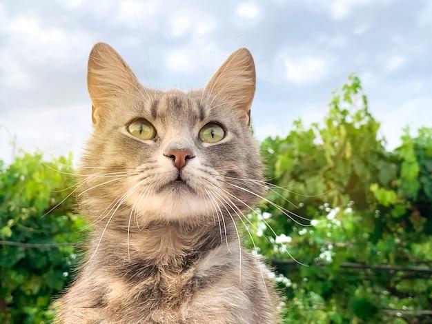 Leuke grijze kat op een blauwe hemelachtergrond