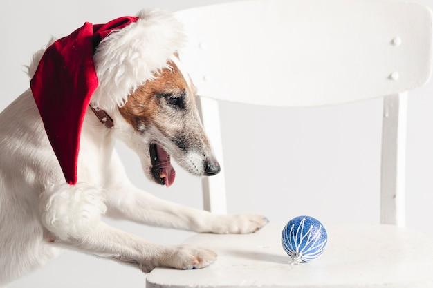 Leuke hefboom russel die de hoed van de kerstman draagt