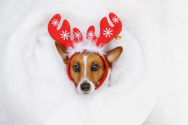 Leuke hefboom russell in een rendier die in sneeuw liggen.