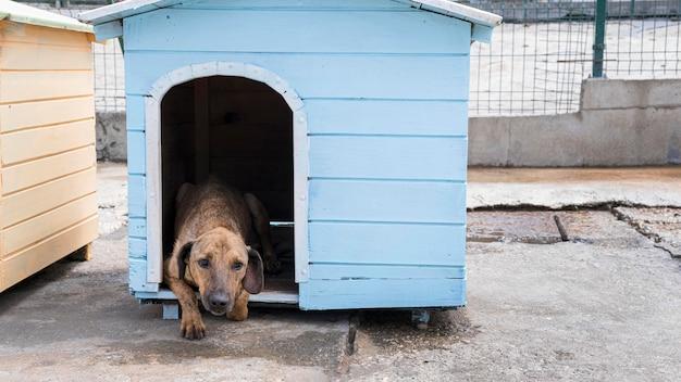 Leuke hond die binnenshuis wacht om door iemand te worden geadopteerd