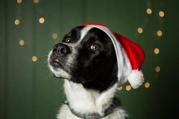 Leuke hond die de rode hoed van santa draagt