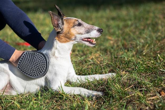 Leuke hond die door eigenaar in park wordt gehouden