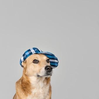 Leuke hond die hoed draagt