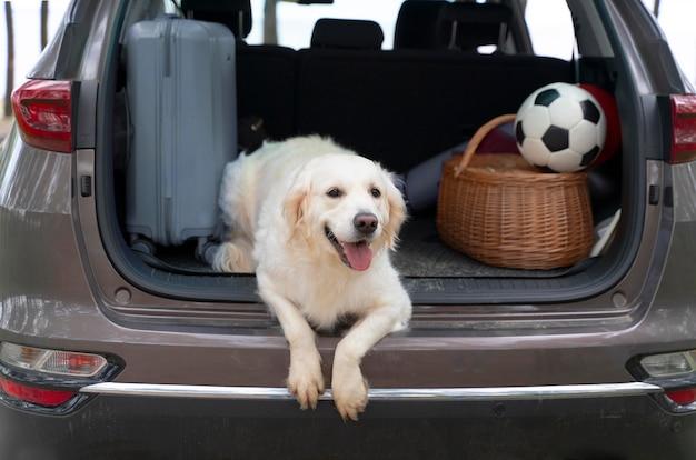 Leuke hond die in de kofferbak ligt