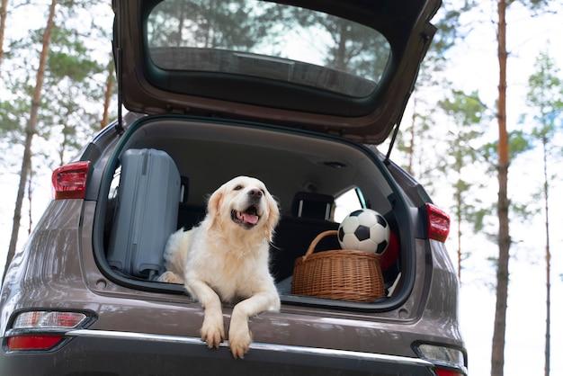 Leuke hond die in een lage hoek in de kofferbak ligt