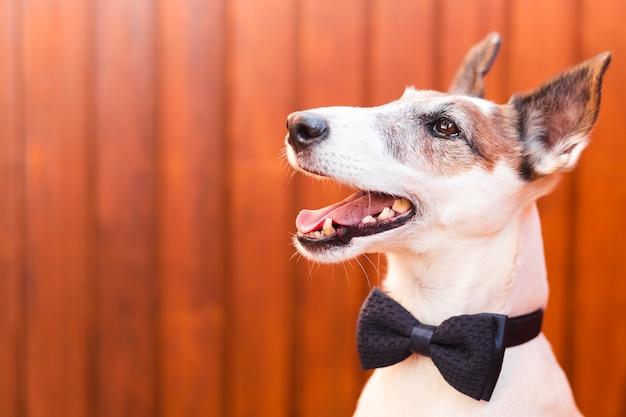 Leuke hond die klassieke boog draagt