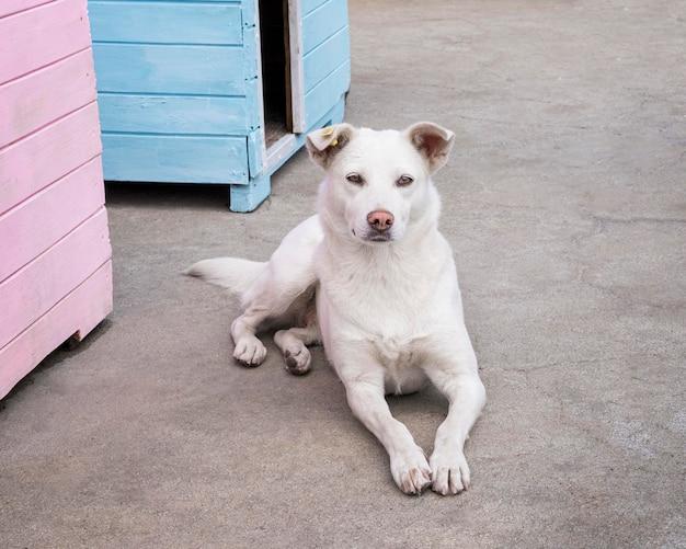 Leuke hond die wacht om door iemand te worden geadopteerd