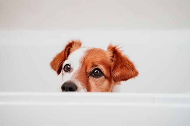 Leuke hond in badkuip