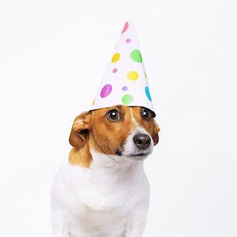 Leuke hond in carnaval feestmuts viert verjaardag.