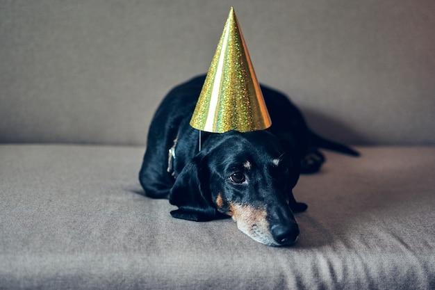 Leuke hond in feestmuts. gefeliciteerd met je verjaardag. zwart bruin tekkelportret dat een nieuw jaar viert.