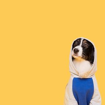 Leuke hond met een kostuum