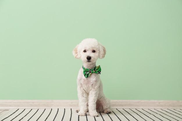 Leuke hond met groene vlinderdas dichtbij kleurenmuur. st. patrick's day-viering