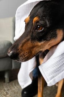 Leuke hond met handdoek