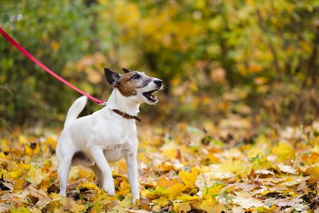 Leuke hond met leiband die zich in het meest forrest bevindt