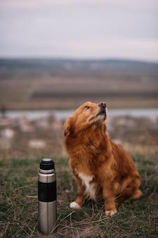 Leuke hond met thermosfles buitenshuis