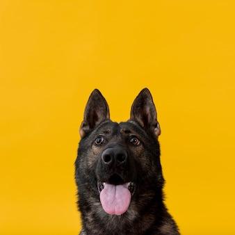 Leuke hond met uit tong en exemplaar-ruimte