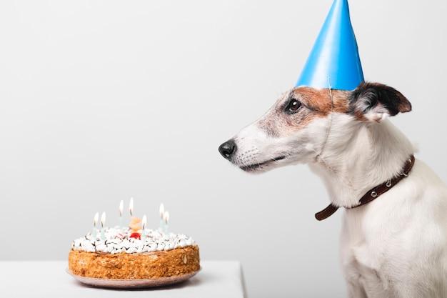 Leuke hond met verjaardagstaart en kaarsen