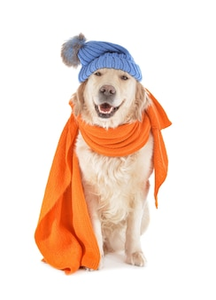 Leuke hond met warme geïsoleerde sjaal en hoed. concept van het stookseizoen