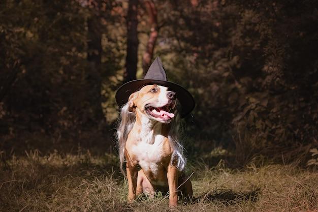 Leuke hond verkleed voor halloween als vriendelijke bosheks. mooie staffordshireterriër pup in kostuum van hoed en grijs haar in herfst bos