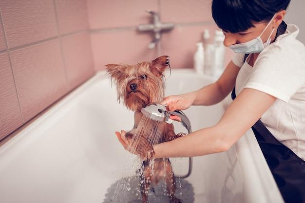 Leuke hond wassen. donkerharige vrouw met masker die schattig hondje wast na het verzorgen Premium Foto