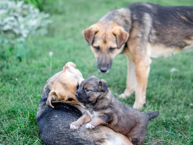 Leuke honden met een kleine puppy die in het gras spelen