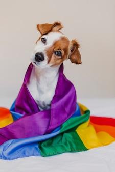 Leuke hondhefboom russell verpakt in vlag van regenbooglgbt op wit bed in slaapkamer. trots maand vieren en wereldvrede concept. liefde is liefde