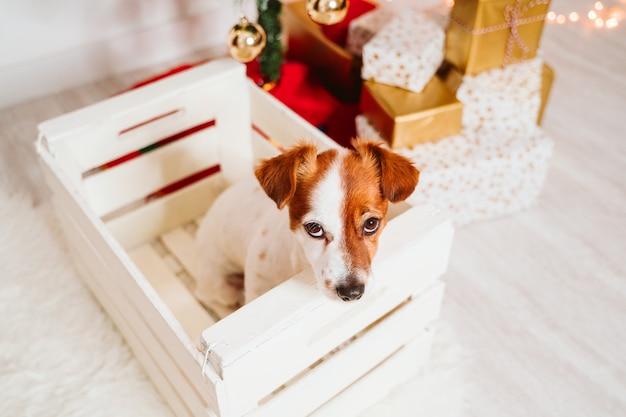 Leuke jack russell hond in een doos thuis door de kerstboom
