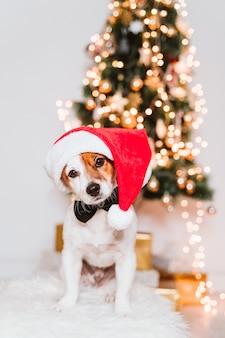 Leuke jack russell hond thuis door de kerstboom, hond draagt een rode kerstmuts