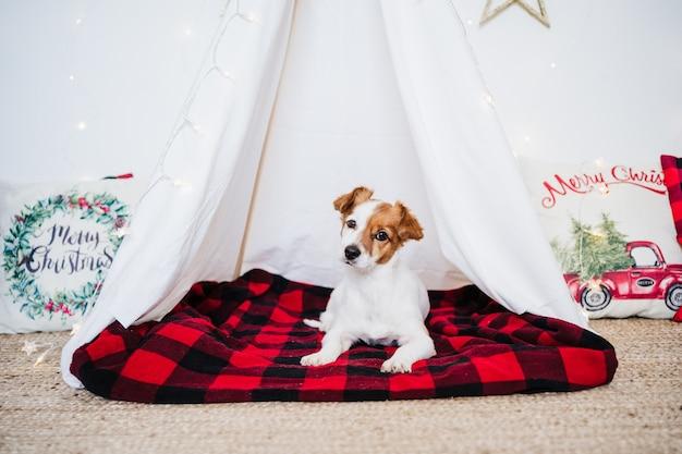Leuke jack russell hond thuis permanent met kerstversiering. kersttijd