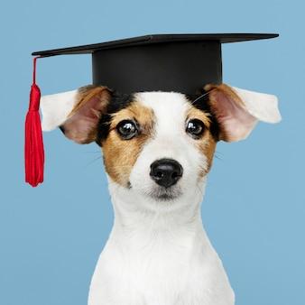 Leuke jack russell terrier in een afstuderenpet