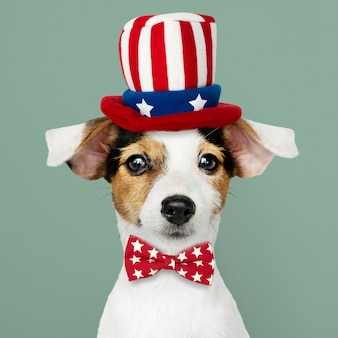 Leuke jack russell terrier in uncle sam-hoed en vlinderdas